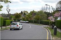 TQ2688 : Kingsley Way by N Chadwick