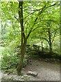 SK1965 : Footbridge over River in Lathkill Dale by David Smith