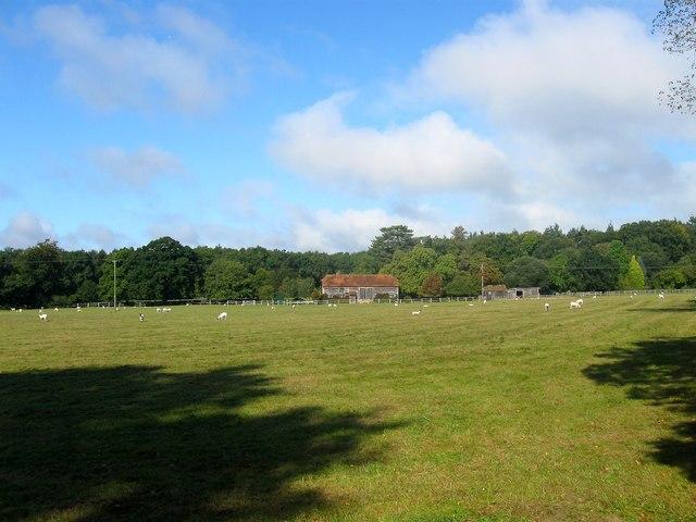 Dover Field (1)