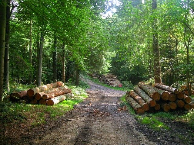 Woodstacks, Public Bridleway 2208