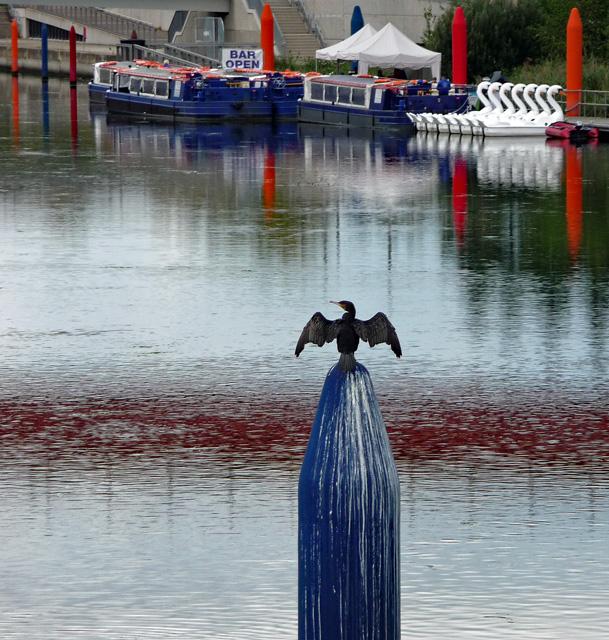 Black bird, Waterworks River