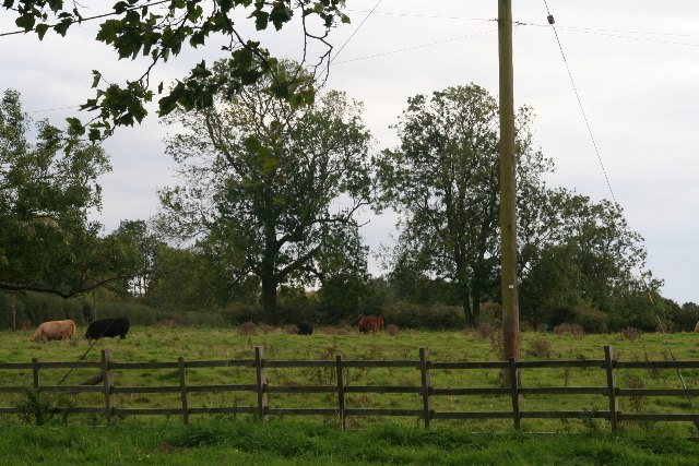 Pasture by Main Road, Stixwould