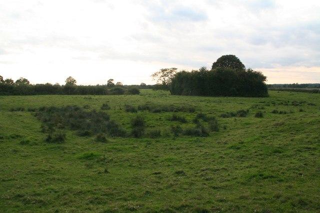 Marshy field behind Horsington Church