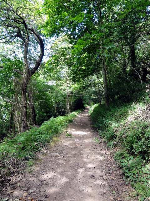 On the Footpath through Long Wood