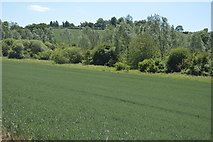 TL5234 : Debden Water valley by N Chadwick