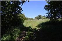 TL5334 : Farm track by N Chadwick