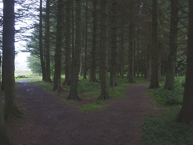 Track junction near the picnic site, Craik Forest