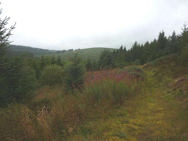 Abandoned track, Craik Forest