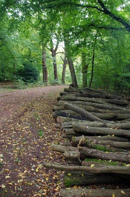 Log-pile in The Hawk Wood