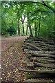TQ3895 : Log-pile in The Hawk Wood by Glyn Baker