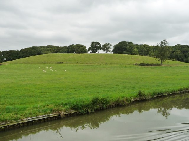 Sheep grazing , south of Kicklewell Spinney