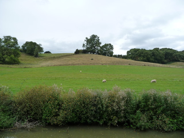 Sheep grazing below the Laughton Hills