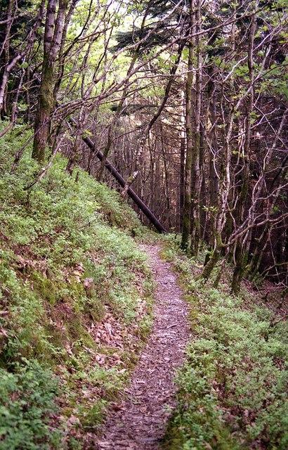 Path in Coed Rheidol
