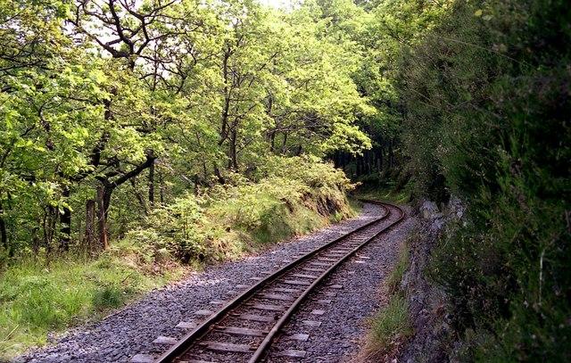 Vale of Rheidol railway through Coed Ty'n-y-castell
