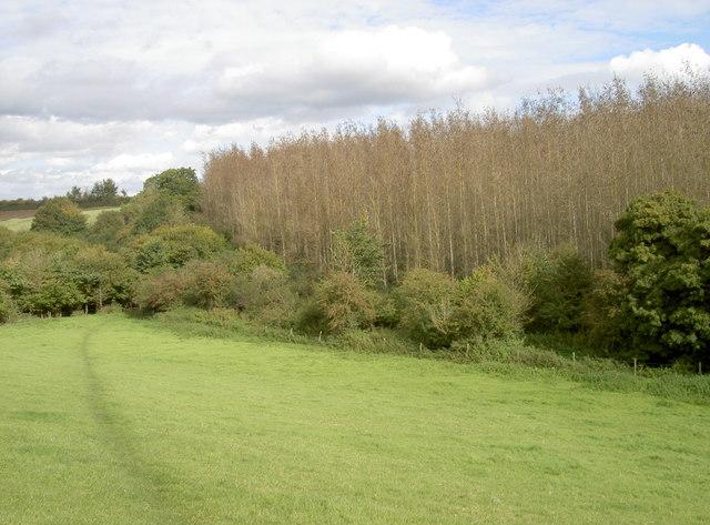 A tall plantation