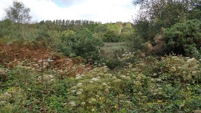 Luxuriant late-summer vegetation