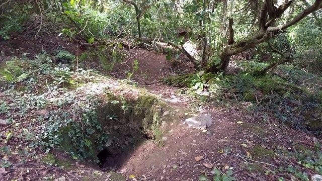 Badger sett in the woods