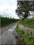SX5595 : Access road to Lurchardon by David Smith