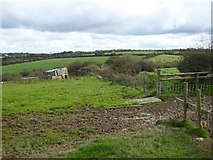 SX5595 : Field and old shed by the Northlew Road by David Smith