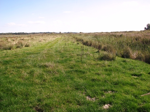 Marsh pastures north of the River Yare
