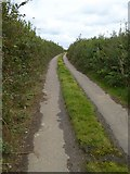 SX5597 : Road to Westacombe by David Smith