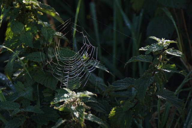 Spider's web at Clibberswick