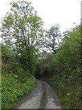 SS5500 : Leighclose Wood, Inwardleigh by David Smith
