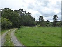 SS5401 : Woodland at Medland by David Smith