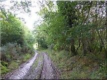 SS5401 : Track north of Medland Farm by David Smith