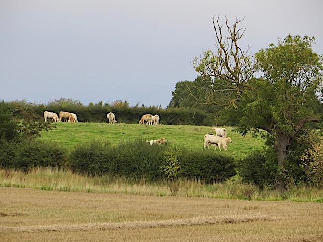 Farmland near Whitwell-on-the-Hill