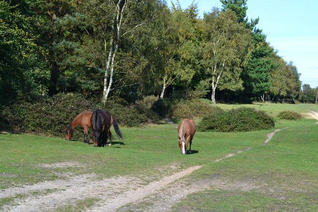 Ponies at Dibden