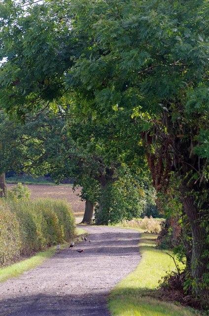 Farm Drive to Sheepcotes