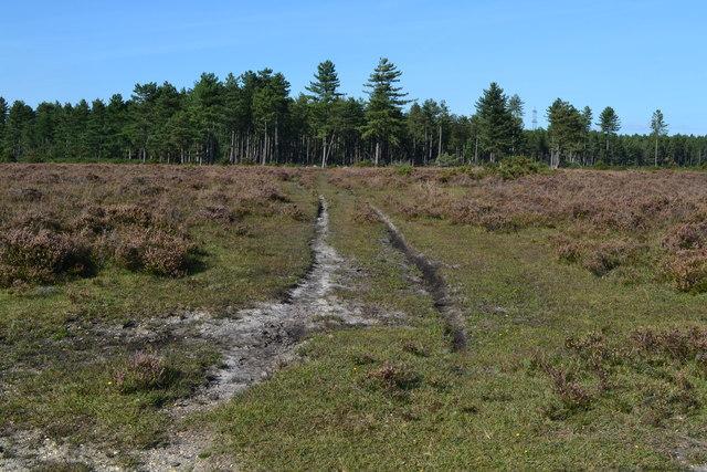 Path on Beaulieu Heath