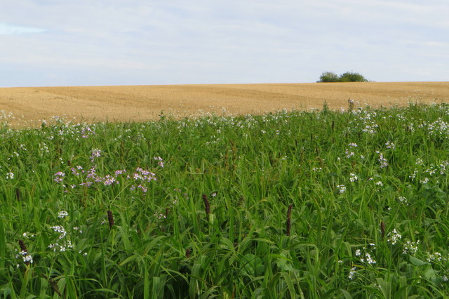 Stubble field with a wild margin