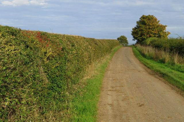Farm lane and footpath into Harrold