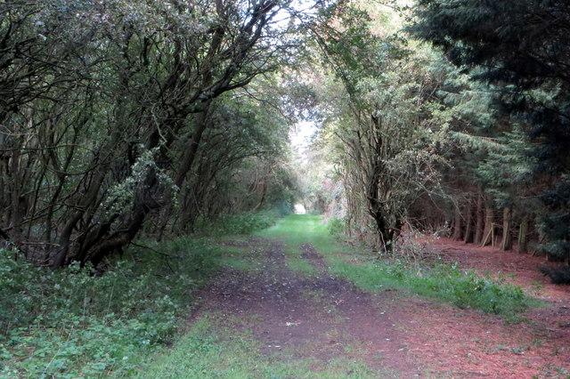 Milton Keynes Boundary Walk through the woods