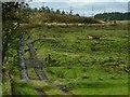 NS4759 : Farm track by Lairich Rig