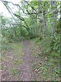 SS5402 : Bridleway and hedgebanks south of Essworthy by David Smith