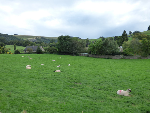 Sheep in a field, Marske