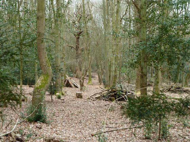 Woodland east of Oakfields