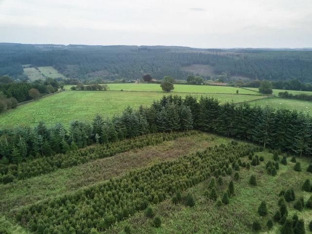 Christmas Tree plot at Hartoft