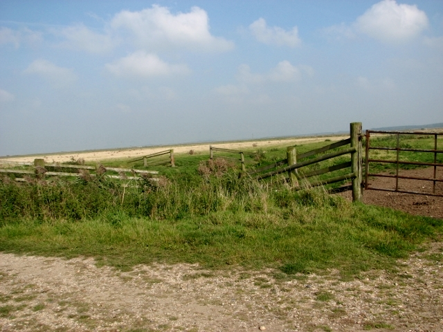 Pastures in the Thurlton Marshes