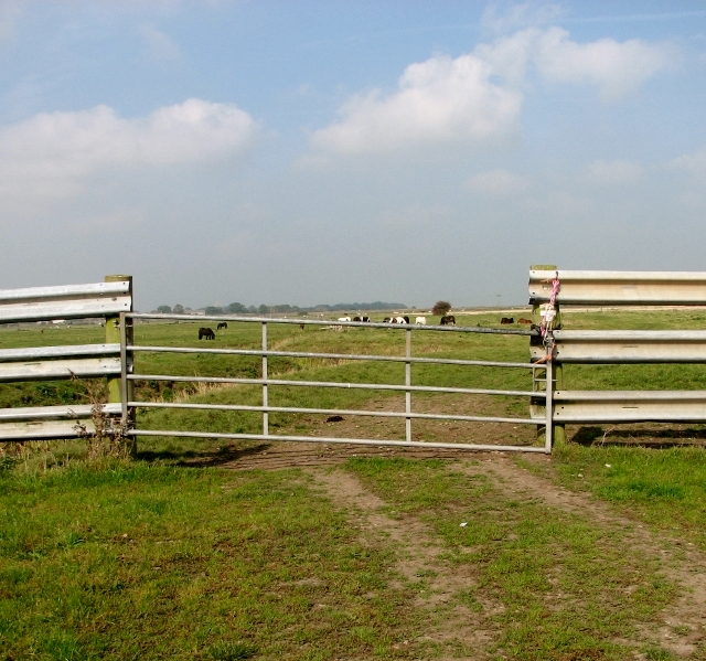 Gate into a marsh pasture