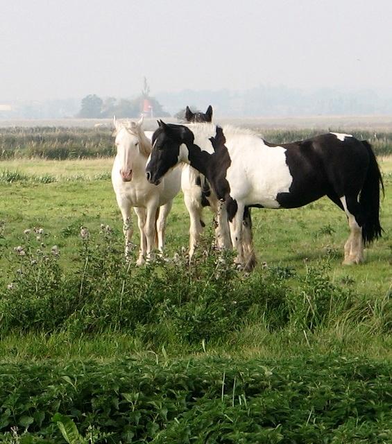 Ponies enjoying the autumn sunshine