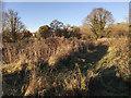 SP3065 : Joggers' or dog walkers' side path, Leam Road field, Myton, Warwick by Robin Stott