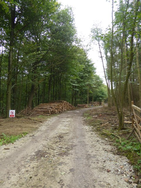 Forestry road in New Piece Wood