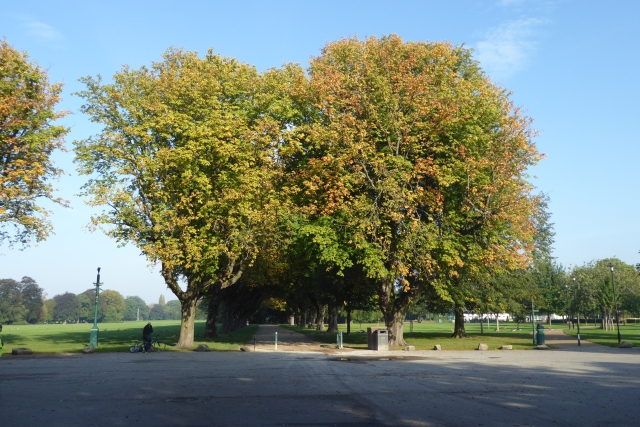 Large trees at East Park