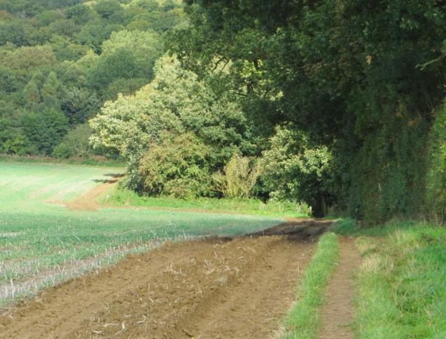 Entering Pretty Wood, near Welburn