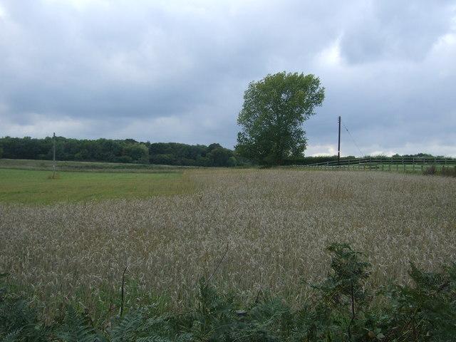 Crop field near Boundary Farm