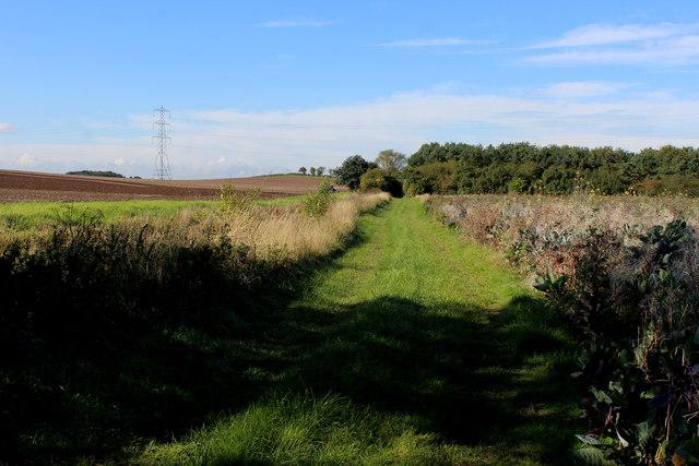 Grass Track heading towards Nova Scotia Wood